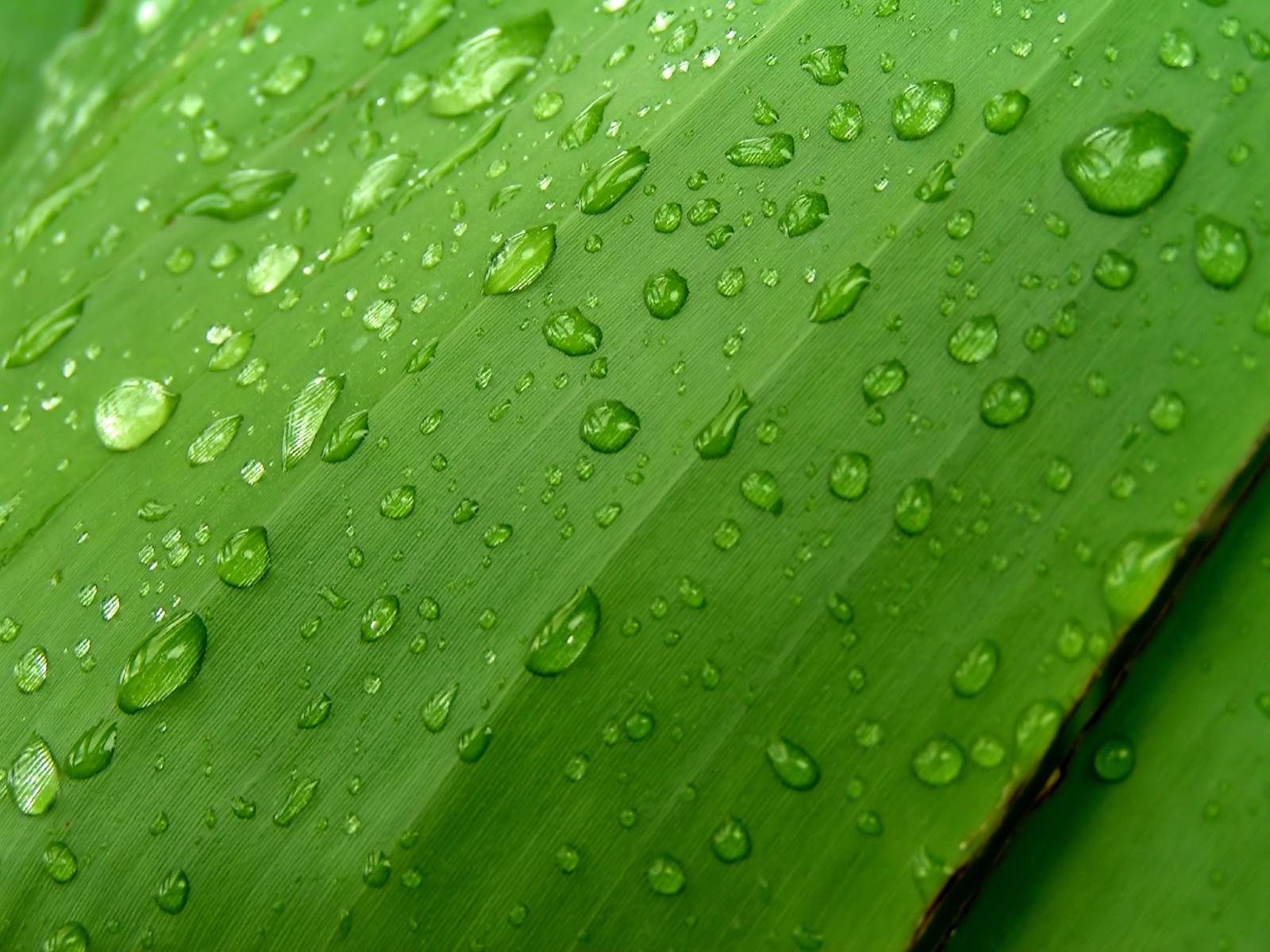 Темно-зеленый лист