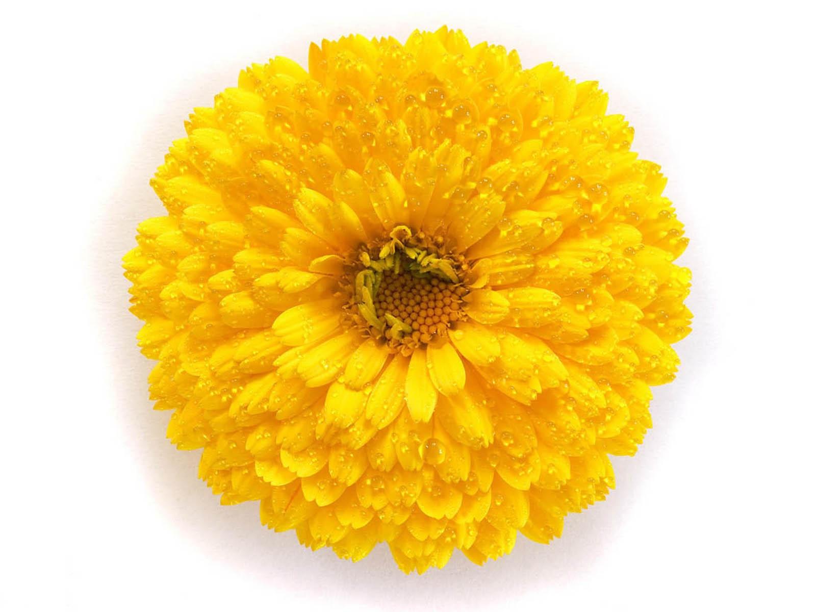 Фото рисунок жёлтый цветок