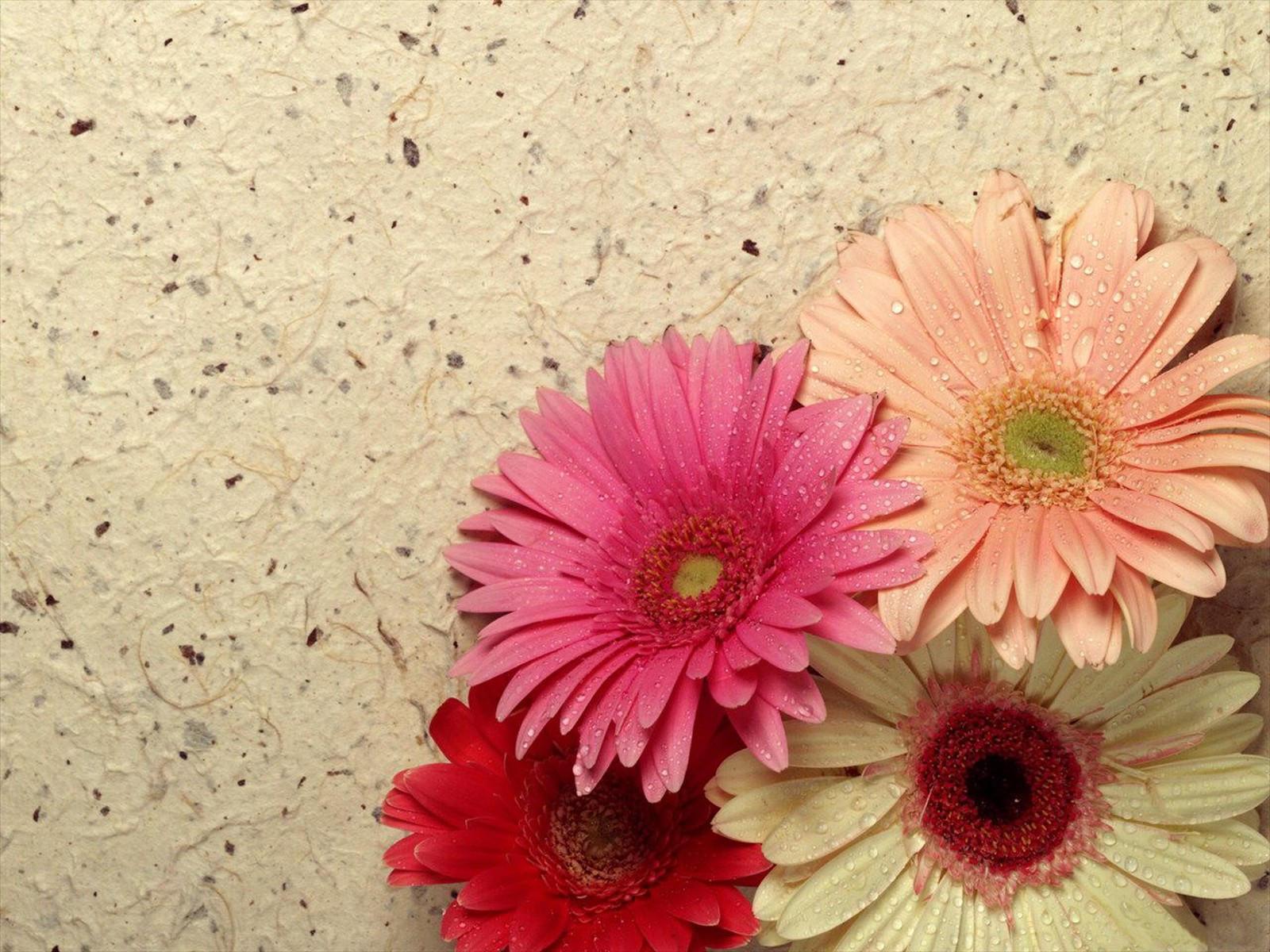 С днем рождения открытки цветы герберы, днем