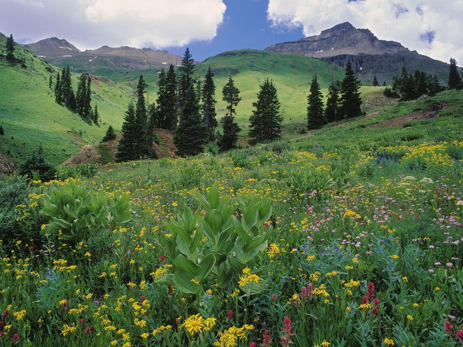 Цветущий альпийский луг