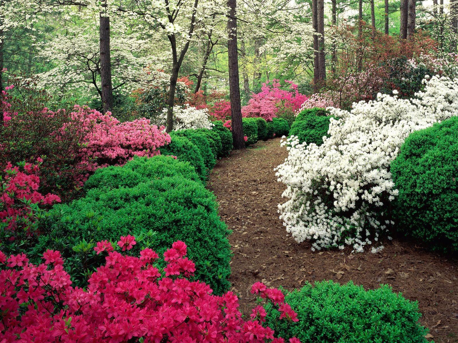 Многолетние цветы сажаем осенью 36