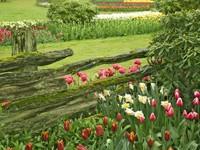 Клумбы тюльпанов в парке