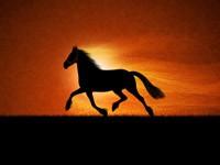 Чёрный светящийся конь