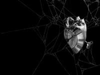 Помятые часы в паутине