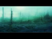 Мертвый лес в тумане