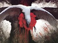 Распятая птица в крови