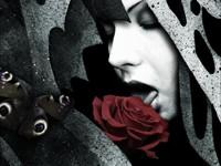 Дама лижет красную розу