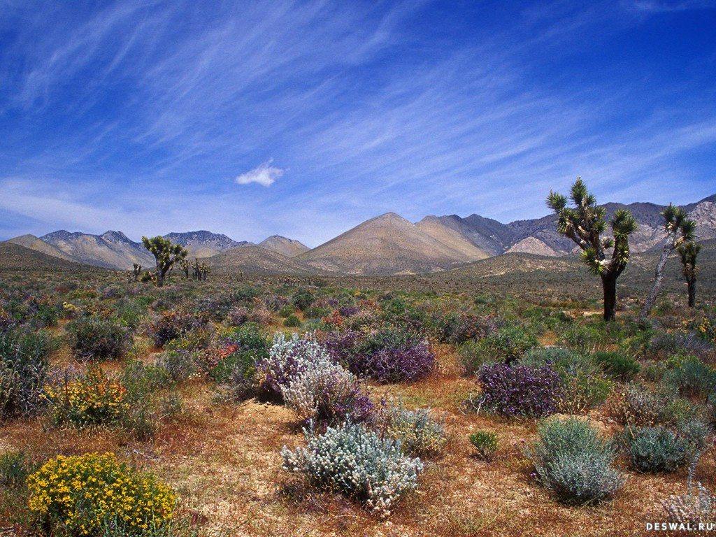 Фото 5.. Нажмите на картинку с обоями природы - пустыня, пески, чтобы просмотреть ее в реальном размере