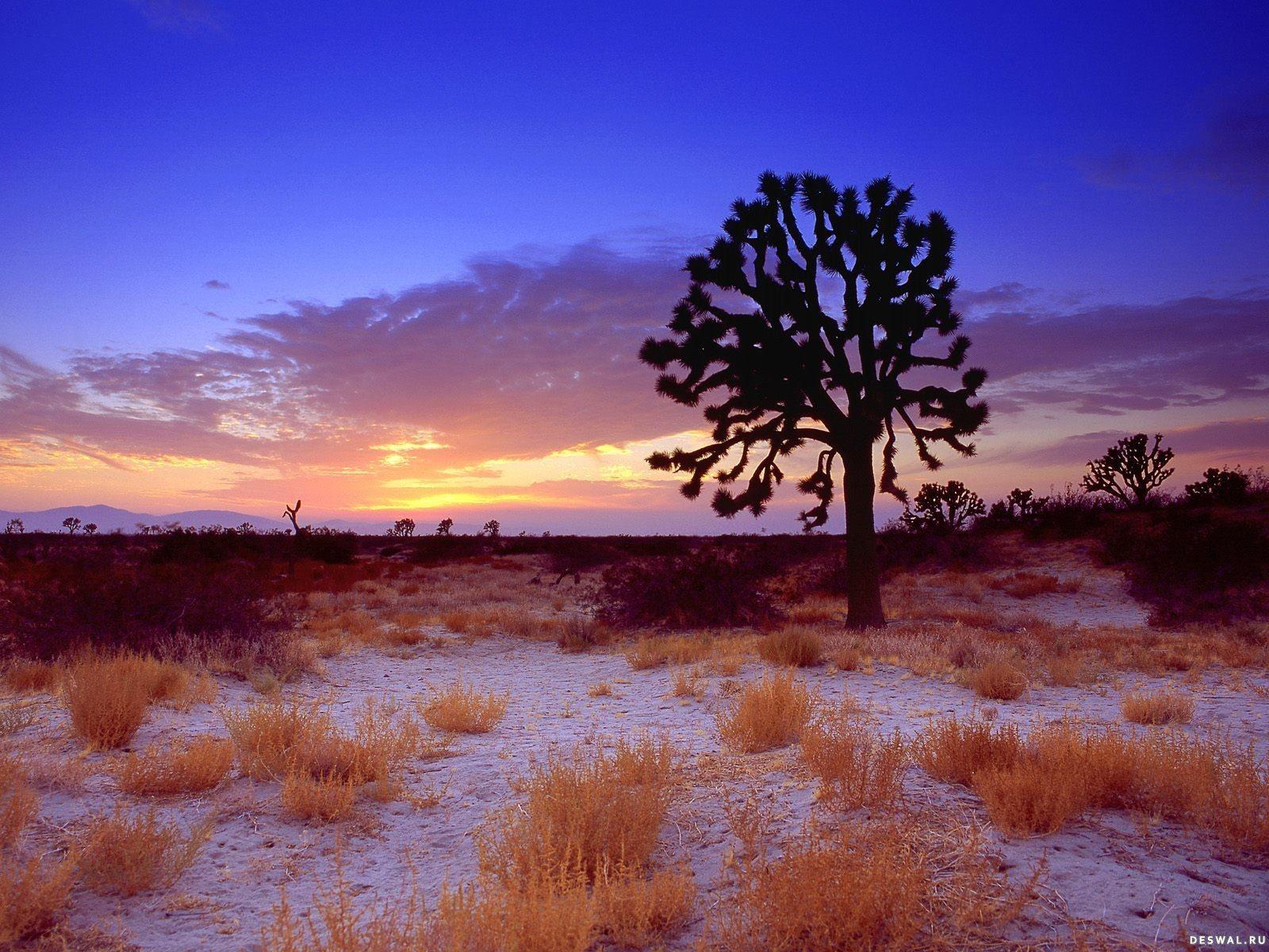 Фото 12.. Нажмите на картинку с обоями природы - пустыня, пески, чтобы просмотреть ее в реальном размере