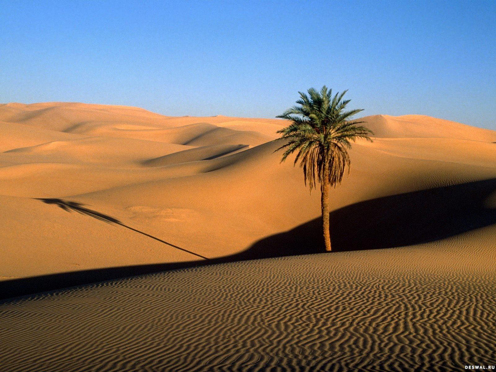 Фото 13.. Нажмите на картинку с обоями природы - пустыня, пески, чтобы просмотреть ее в реальном размере