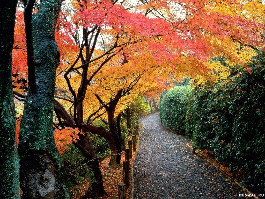 Фото 11.. Нажмите на картинку с обоями природы - осень, чтобы просмотреть ее в реальном размере