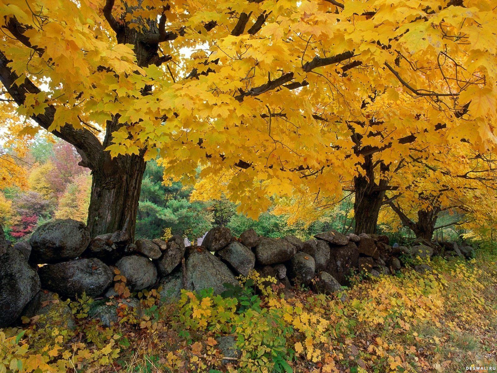 Фото 1.. Нажмите на картинку с обоями природы - осень, чтобы просмотреть ее в реальном размере