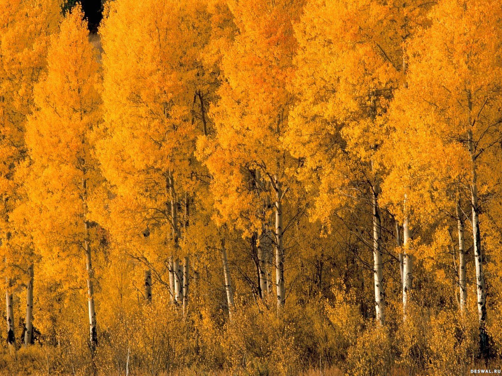 осень фотообои: