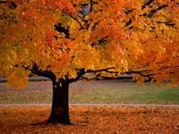 Фото 2.. Обои с природой для рабочего стола: обои с природой осенью