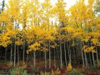 Фото 3.. Обои с природой для рабочего стола: обои с природой осенью