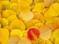 Фото 4.. Обои с природой для рабочего стола: обои с природой осенью