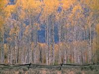 Фото 5.. Обои с природой для рабочего стола: обои с природой осенью