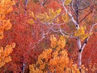 Фото 6.. Обои с природой для рабочего стола: обои с природой осенью