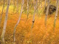 Фото 8.. Обои с природой для рабочего стола: обои с природой осенью