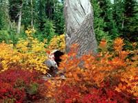 Фото 9.. Обои с природой для рабочего стола: обои с природой осенью