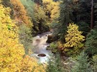 Фото 10.. Обои с природой для рабочего стола: обои с природой осенью