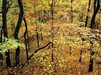 Фото 13.. Обои с природой для рабочего стола: обои с природой осенью