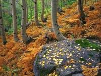 Фото 82.. Обои с природой для рабочего стола: обои с природой осенью
