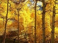 Фото 86.. Обои с природой для рабочего стола: обои с природой осенью