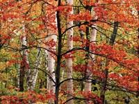 Фото 123.. Обои с природой для рабочего стола: обои с природой осенью
