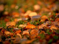Фото 128.. Обои с природой для рабочего стола: обои с природой осенью