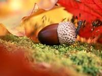 Фото 129.. Обои с природой для рабочего стола: обои с природой осенью