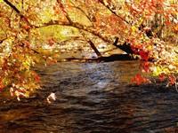 Фото 132.. Обои с природой для рабочего стола: обои с природой осенью