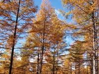 Фото 138.. Обои с природой для рабочего стола: обои с природой осенью