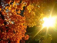 Фото 140.. Обои с природой для рабочего стола: обои с природой осенью