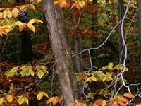 Фото 142.. Обои с природой для рабочего стола: обои с природой осенью