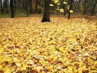 Фото 144.. Обои с природой для рабочего стола: обои с природой осенью