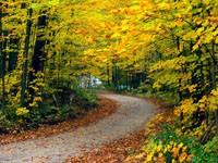 Фото 146.. Обои с природой для рабочего стола: обои с природой осенью