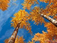 Фото 149.. Обои с природой для рабочего стола: обои с природой осенью