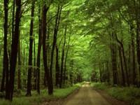Фото 4.. Обои с природой для рабочего стола: лес