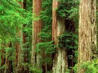 Фото 5.. Обои с природой для рабочего стола: лес