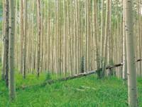 Фото 6.. Обои с природой для рабочего стола: лес