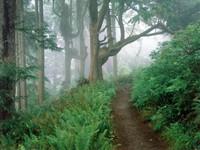 Фото 10.. Обои с природой для рабочего стола: лес