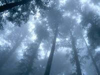Фото 11.. Обои с природой для рабочего стола: лес