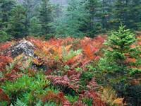 Фото 12.. Обои с природой для рабочего стола: лес