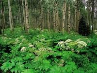 Фото 13.. Обои с природой для рабочего стола: лес