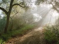 Фото 15.. Обои с природой для рабочего стола: лес
