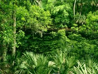 Фото 3.. Обои с природой для рабочего стола: пороги и реки