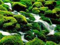 Фото 7.. Обои с природой для рабочего стола: пороги и реки