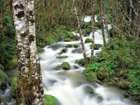 Фото 10.. Обои с природой для рабочего стола: пороги и реки