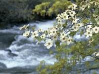Фото 11.. Обои с природой для рабочего стола: пороги и реки